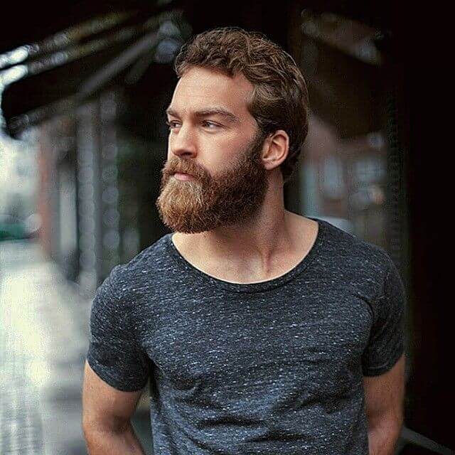 Равномерная борода